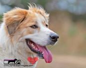 dog photography RR (26).jpg