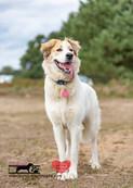 dog photography RR (50).jpg