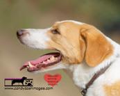 dog photography RR (46).jpg