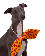 Blue the whippet 3