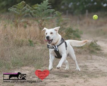 dog photography RR (3).jpg