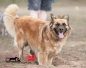 dog photography RR (8).jpg