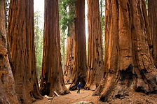 SequoiaNationalPark001.jpg
