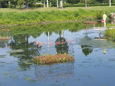 Sustainability Research: Floating Wetlands Islands University of Virginia Sustainability Grant