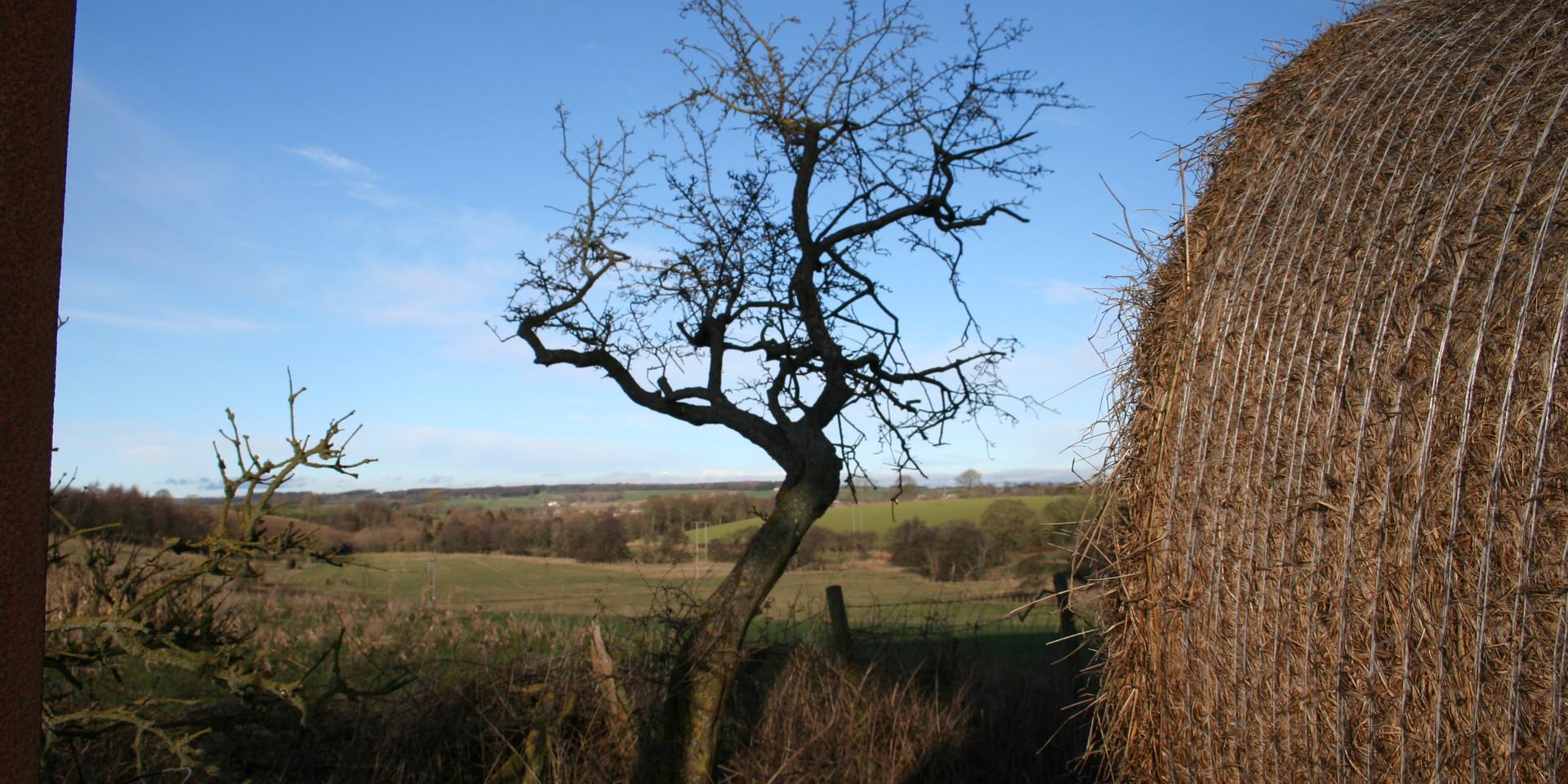 Bale View