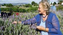 The Magic of Lavender