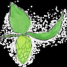 drawing-beer-hop.tif
