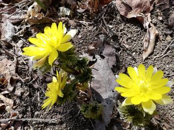 新しい春がきた