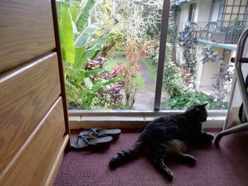 マウイ島初上陸とハワイ島横断の旅Vol.3