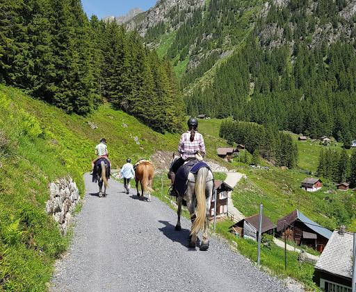 Pferd 2.jpg