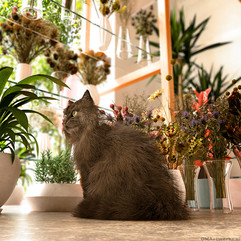 The cat among the flowers.jpg