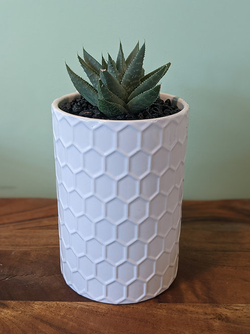 White Honeycomb Canister