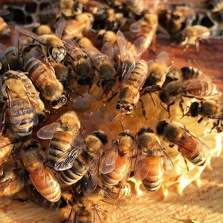 Were having a little honey tasting over