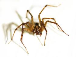 Spider edit II.jpg
