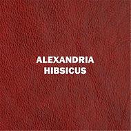 ALEXANDRIA HIBISCUS.jpg