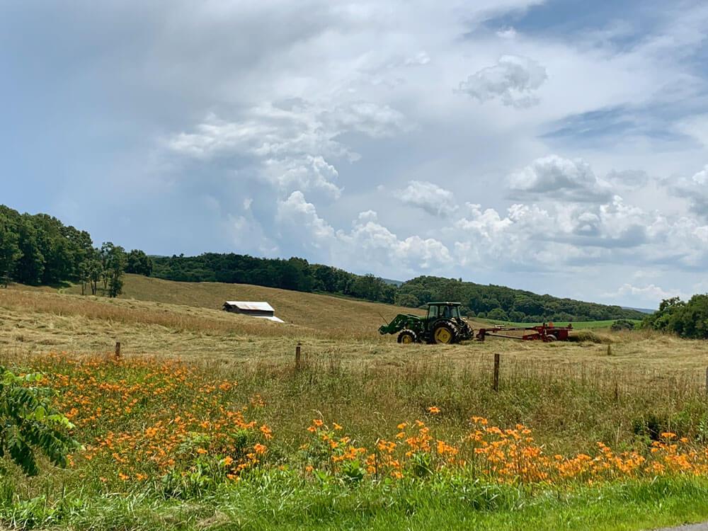 Orange Flowers and A Barn in Field