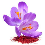 Flower crocus and dried saffron spice is