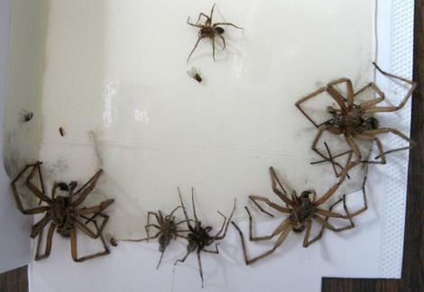 spider infestation.jpg