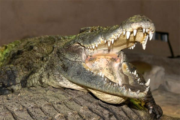 reptilia 3.jpeg
