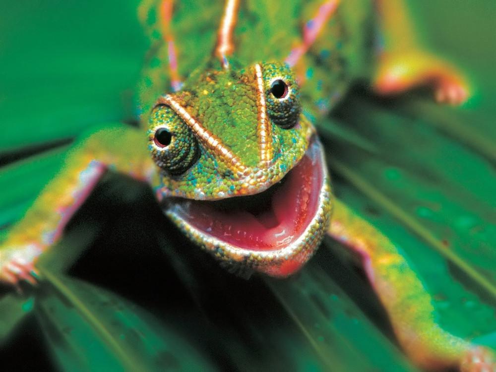 reptilia 4.jpg