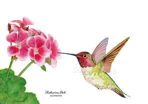 Kolibri mit Blüte
