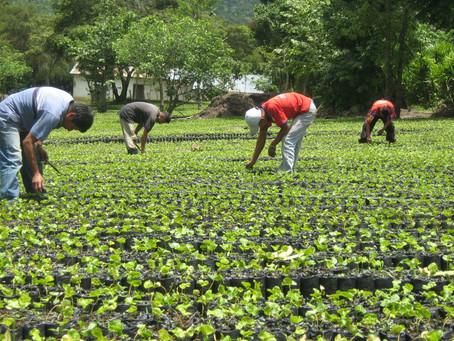FAO lanzó una nueva estrategia centrada en los núcleos más duros de pobreza y hambre en ALyC.