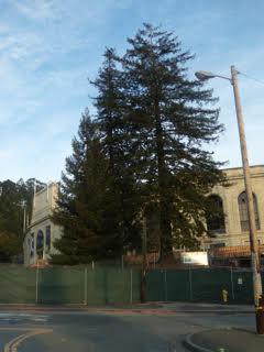 Regular Tree Maintenance with MYKOS PRO Backfill