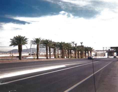 Palm tree plantings with Landscape PRO Paks