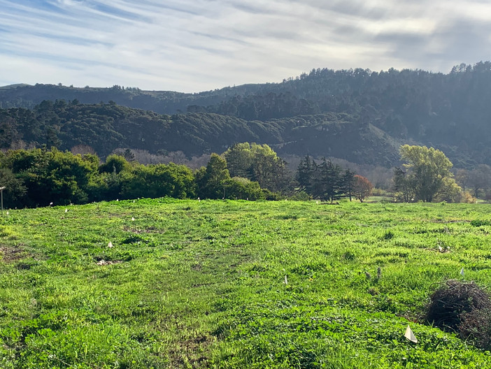 Santa Lucia Reserve Habitat Restoration Project