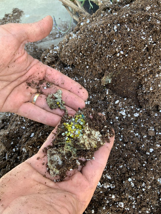 Green Diamond Paks slowly degrade and release fertilizer prills into the soil environment.