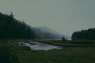 Forest%20Landscape_edited.jpg