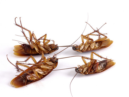How to prevent a cockroach infestation at home