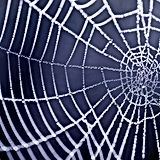 Spider web - Pest Control Company Brisbane