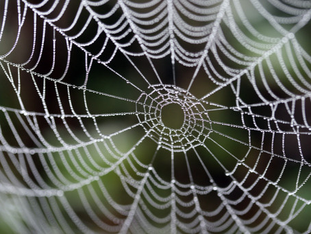 Now you can buy products with synthetic spider silk