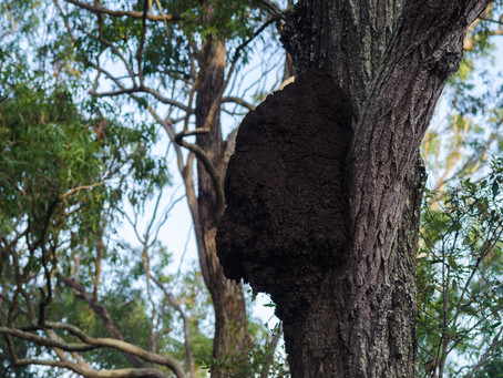 Exactly why you should treat the active termites near your home