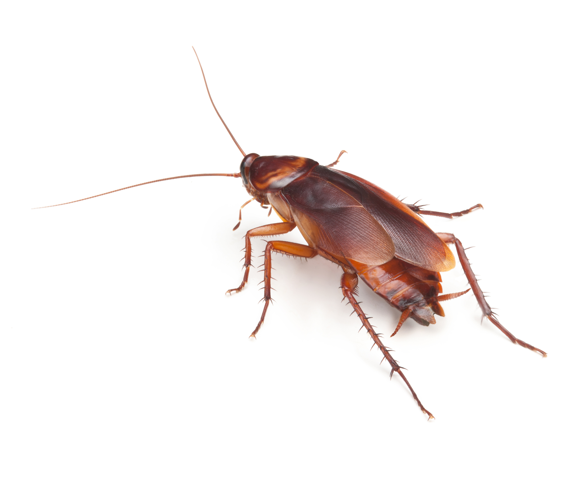 Are cockroaches driving you crazy? | Termite Protection & Termite ...