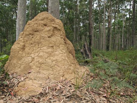 Termite Solutions in Gumdale