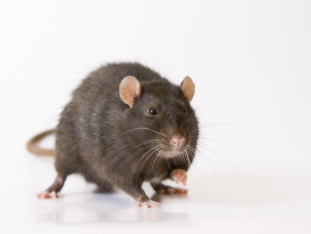 Is your home rodent ready?