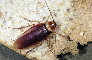 Name that Roach!