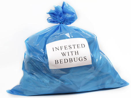 Bed Bugs in New Farm