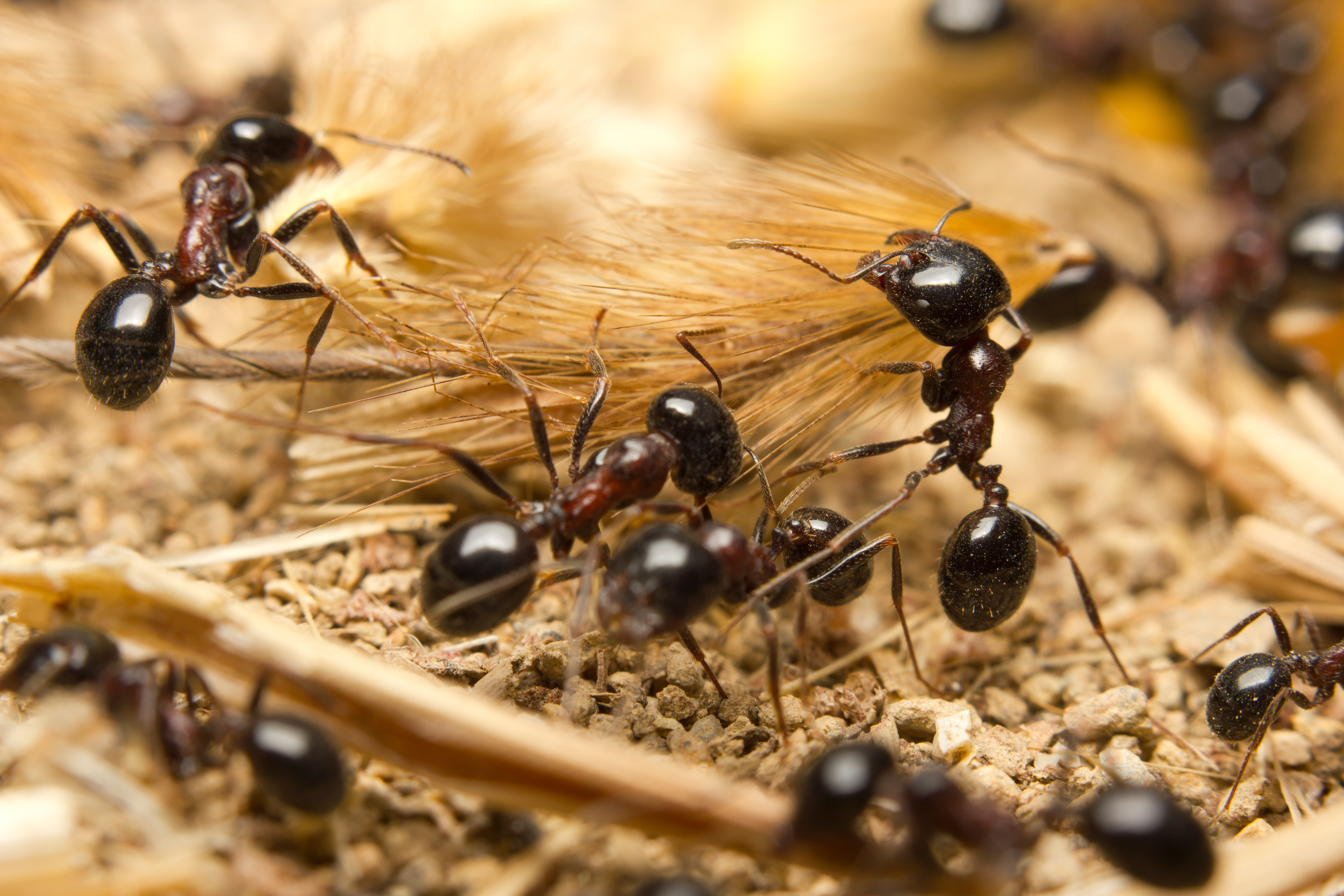 Don\'t let ants march away with Christmas lunch!   Termite Protection ...