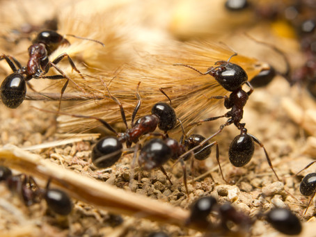 Ants Slow Down The Internet!