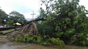 Chuva e ventos fortes derrubam árvore em praça de Ipanema