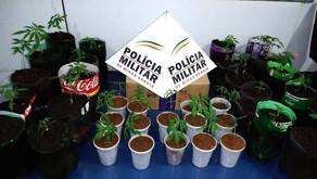 35 pés de maconha são apreendidos em Manhuaçu