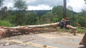 Eucalipto com risco de queda é cortado pelos Bombeiros na BR 116
