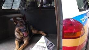 Cão de Faro da PM em Manhuaçu auxilia em diversas operações contra o tráfico