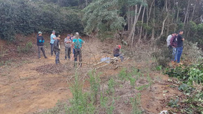 Morador morre na zona rural de Manhuaçu durante corte de árvore