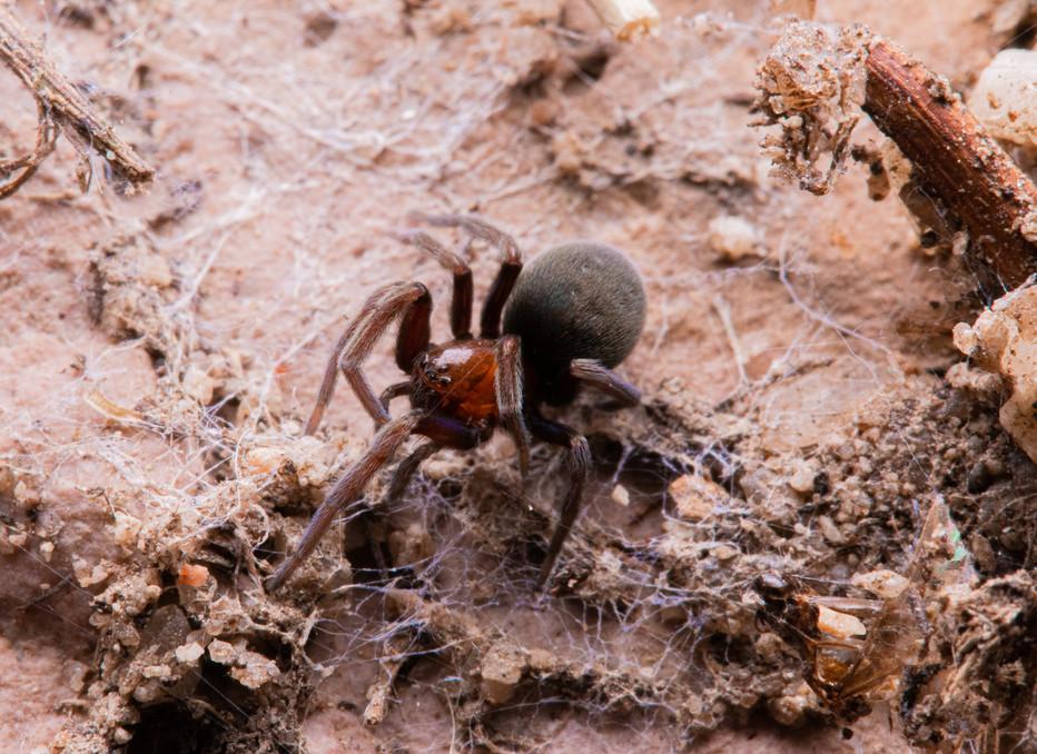 Spider Under Rock