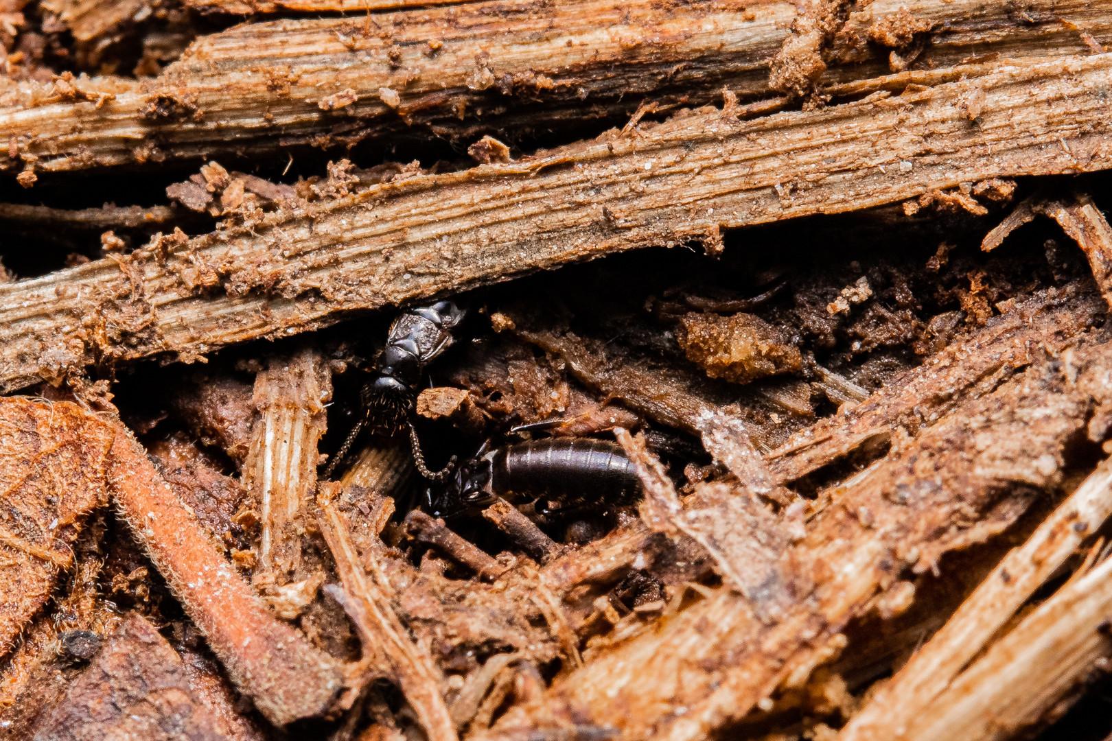 Termite Royal Chamber