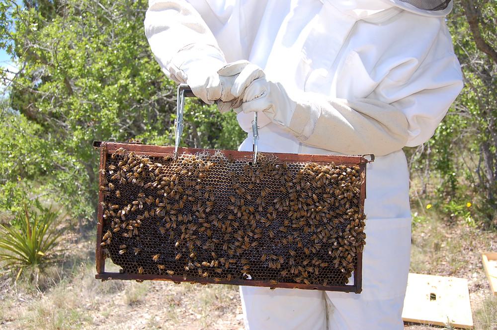 great oaks farm, bees, honeybees, beekeeper, leander tx